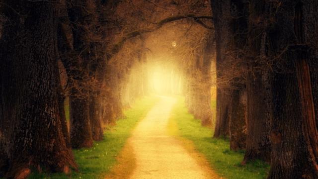 森の中に続く道
