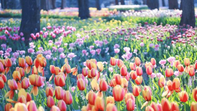 色とりどりなお花畑